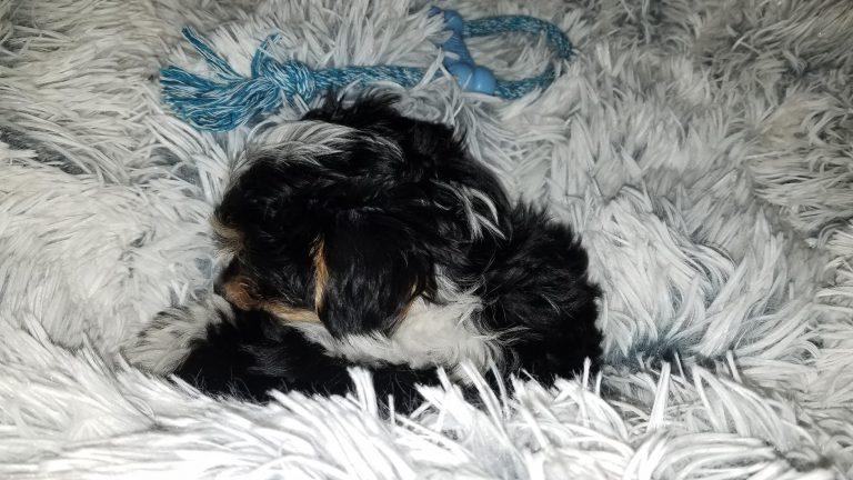 ComfySea™ - Gemütliches Hundebett photo review