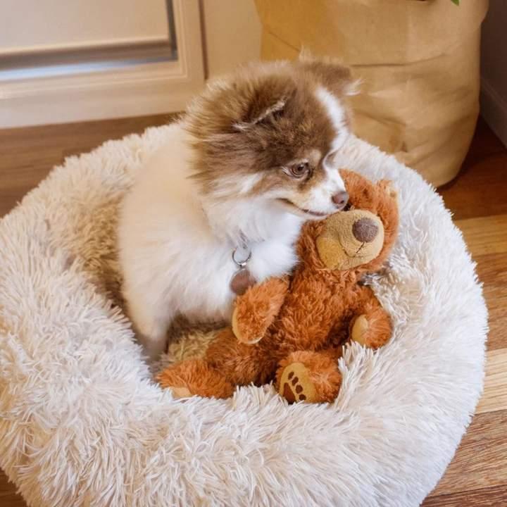 ComfySea™ – Gemütliches Hundebett | Hundebetten & Hundekörbe | Hundebetten  günstig im Shop online kaufen.